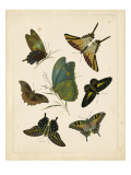 Antique Entomology I