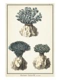 Coral Species IV