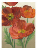 Poppy Love II