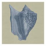 Chambray Shells I Reproduction d'art par Vision Studio