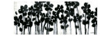 Black Flowers on White II