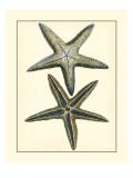 Antique Blue Starfish I Reproduction d'art par Vision Studio