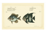 Bloch Antique Fish II