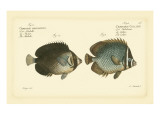 Bloch Antique Fish V