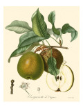 Bessa Pears