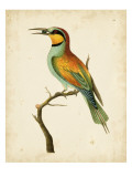 Nodder Tropical Bird I