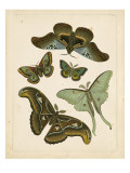 Antique Entomology II