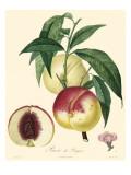 Bessa Peaches