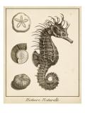 Seahorse Study I