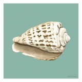 Shell on Aqua II