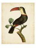 Nodder Tropical Bird III