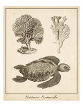 Sea Turtle Study I