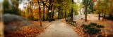 Walkway in a Park  Central Park  Manhattan  New York City  New York State  USA
