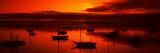 Boats in a Bay  Morro Bay  San Luis Obispo County  California  USA
