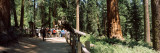 Tourists Near a Lodge in a Forest  Sequoia National Park  California  USA