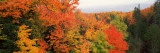 Autumnal Trees in a Forest  Hiawatha National Forest  Upper Peninsula  Michigan  USA
