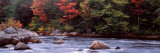 Trees Along a River  Moose River  Adirondack Mountains  New York State  USA