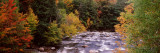 River Flowing Through a Forest  Ausable River  Adirondack Mountains  Wilmington  Essex County