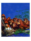 """Orangutans & Bird Nest "" February 17  1940"