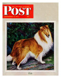 """Collie "" Saturday Evening Post Cover  September 11  1943"