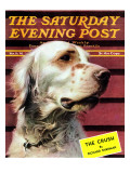 """Springer Spaniel "" Saturday Evening Post Cover  November 16  1940"