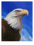 """Closeup of Bald Eagle "" June 13  1942"