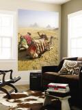 Resting Camels Gaze Across the Desert Sands of Giza  Cairo  Egypt