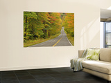 Roadway Through White Mountain National Forest  New Hampshire  USA