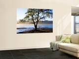 Tree on Playa Catritre  Lago Lacar  San Martin De Los Andes