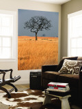 Lone Tree in Grassland