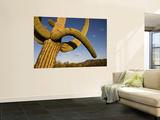 Cacti in West Unit of Saguaro National Park