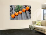 Pumpkins on Steps (Typical Autumn Harvest or Halloween Display)