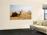 Lone Camel Gazes Across the Giza Plateau Outside Cairo  Egypt