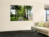 Avenue of Trees Leading Near Vitrac  Dordogne Valley