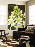 Sticky Tofieldia (Triantha Glutinosa) Flower