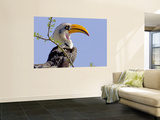 Profile of Yellow-Billed Hornbill Bird  Kenya