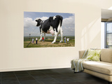 World's Largest Holstein Cow