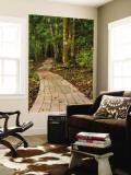 Pathway Leading Through Trees