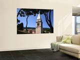 Pines with St Antony's Church (Crka Sveti Antun)