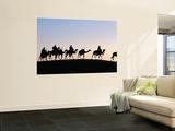 Desert Just Outside Timbuktu  Tuareg Camels at Sunset