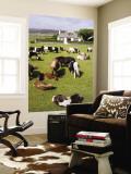 Shetland Ponies at Gott Farm