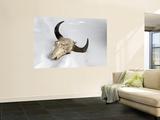 Buffalo Skull