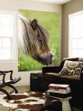 Shetland Pony at Gott Farm
