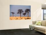Baobab Trees on Horizon  Singida