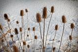 Prairie Seedheads