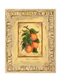 Italian Fruit Apricots