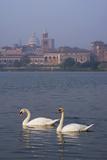 Mantua Swans