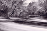 DuPage River Forest BW