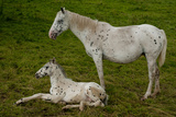 Horse Foal