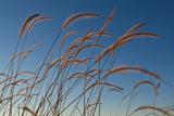 Prairie Grass Landscape